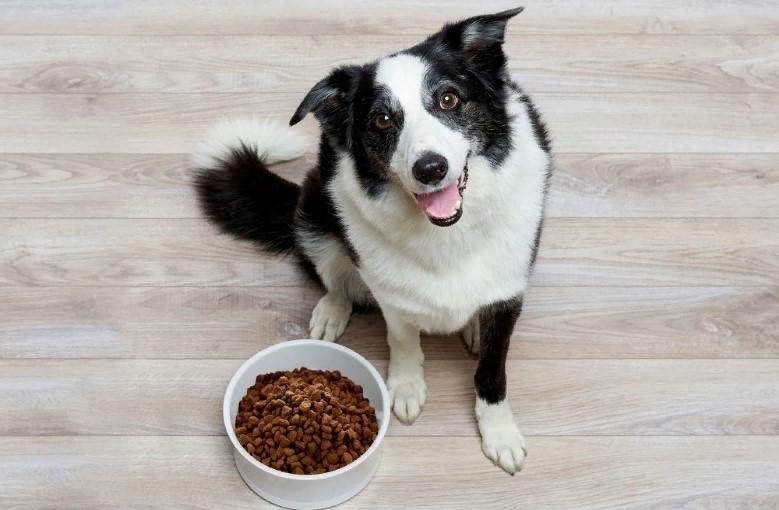 Торговые марки корма для собак, которые не рекомендованы к покупке
